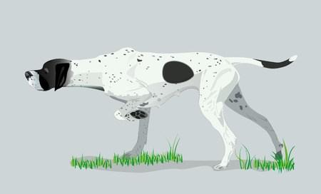 szkolenie psów myśliwskich stójka