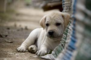 szkolenie psa szczeniaka polkowice zdjęcie