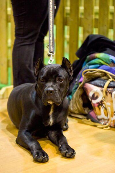 zdjęcie psa wystawa psów głogów