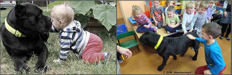cane corso i dziecko