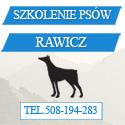 szkolenie psów rawicz
