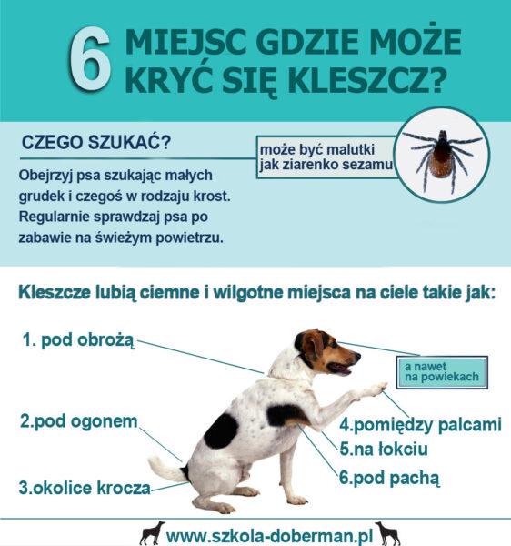 kleszcze szkolenie psów doberman