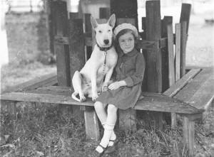 bulterier i dziecko
