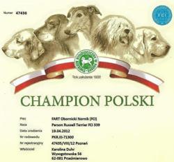 parson russell terrier champion polski