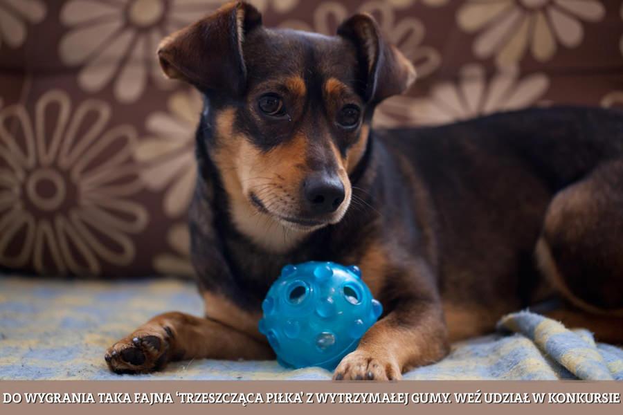 konkurs zdjecie psa i piłka