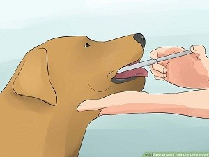 pies-strzykawka