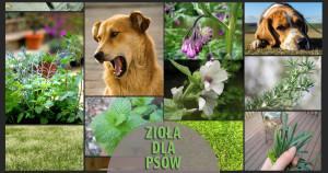 zioła dla psów stosowanie