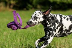 szkolenie psa zabawa zabawa z psem
