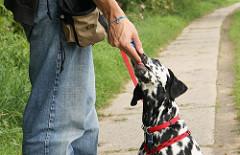 tresura psa żeby nie jadł od obcego