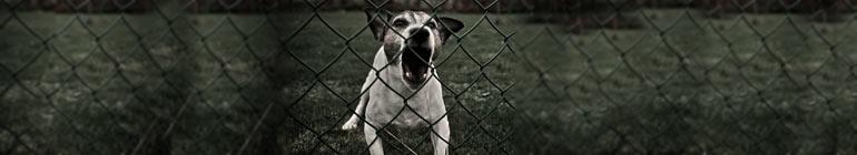 pies do pilnowania posesji zdjęcie