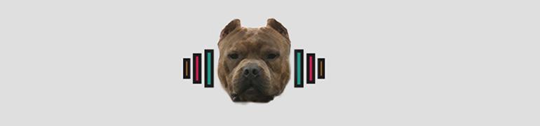 jak zwiększyć masę mięśniową psa amstaffa pitbull
