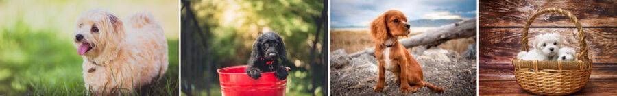 przedszkole dla szczeniąt wrocław zdjęcie psów